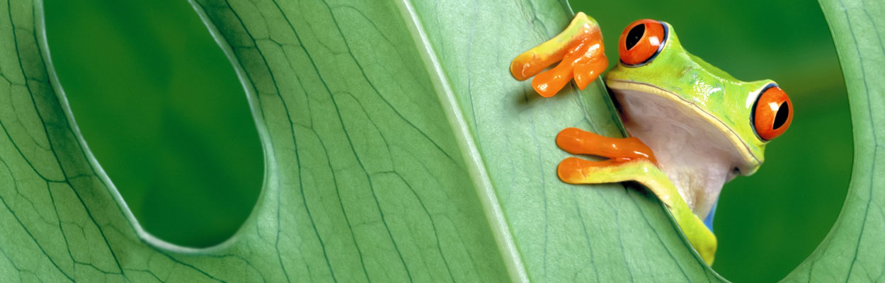 revslide-bkgd-frog